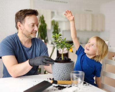 8 consejos para cultivar tus propias plantas en casa.